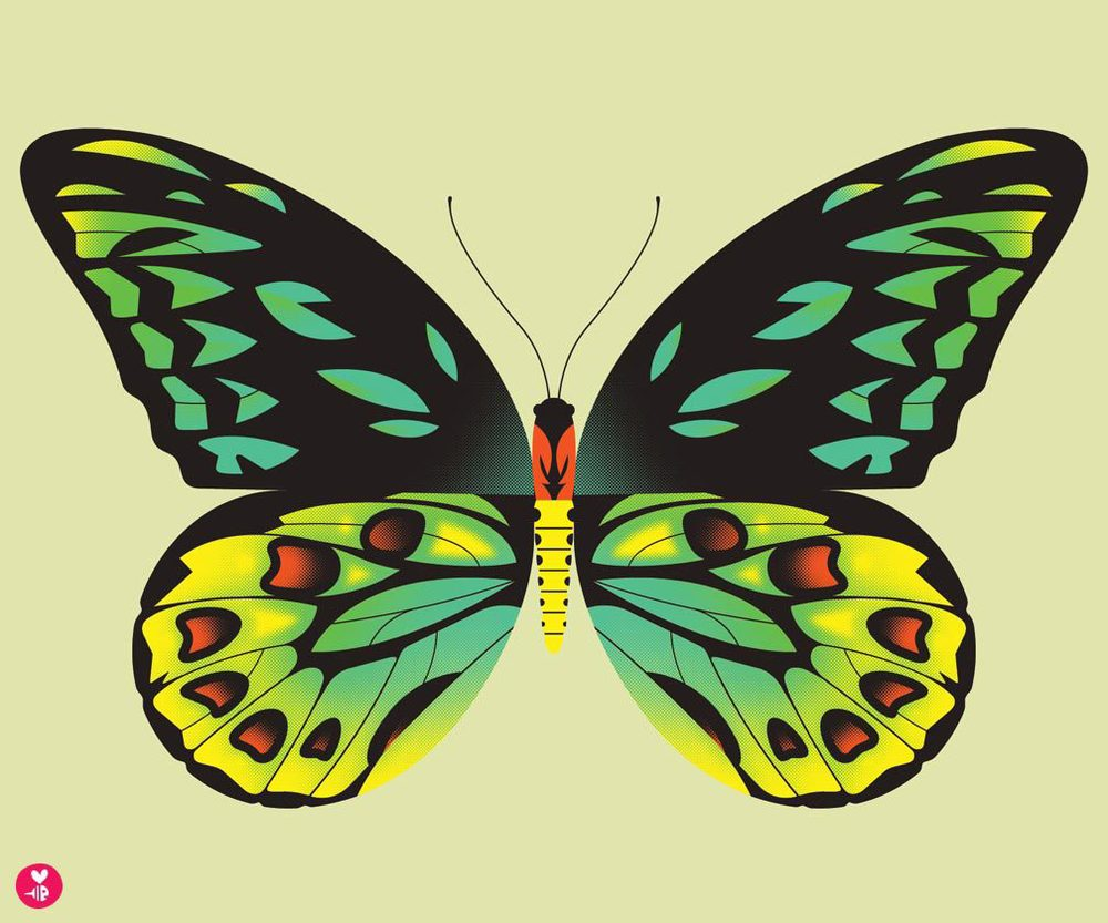 birdwing butterfly print
