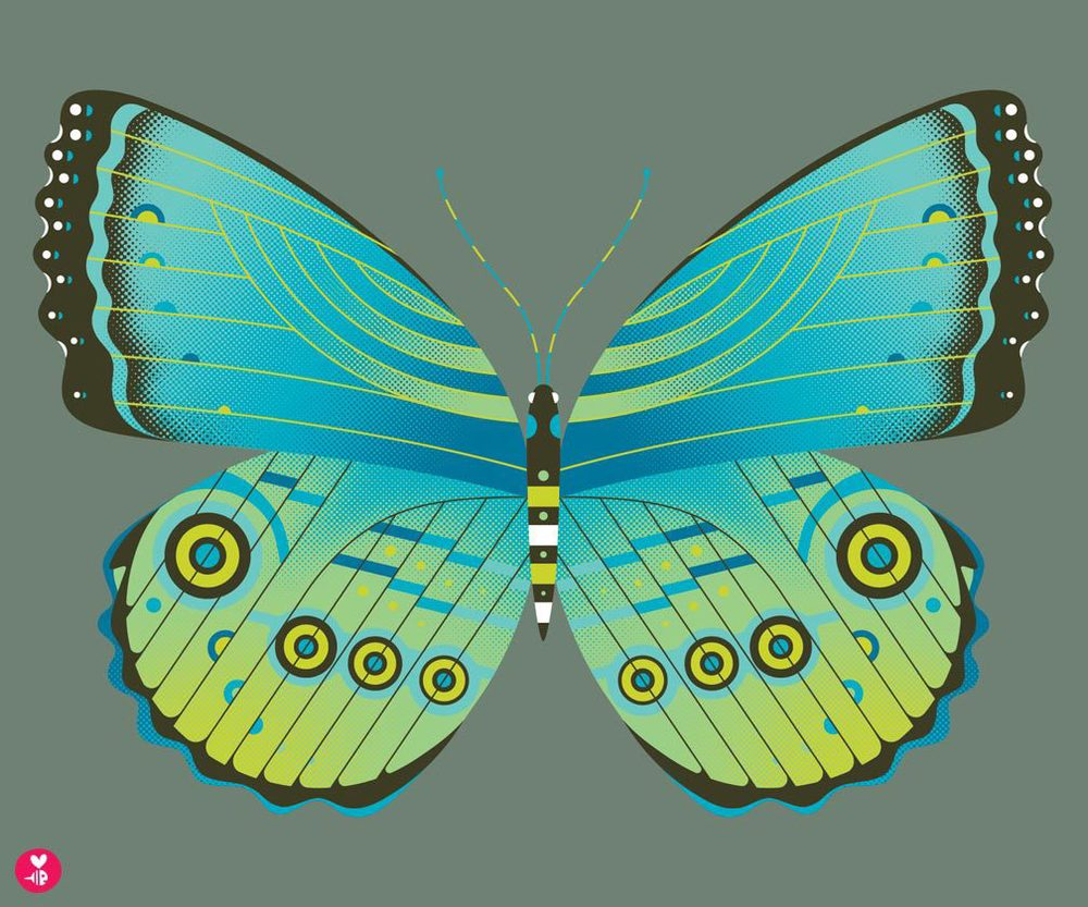 morpho butterfly print