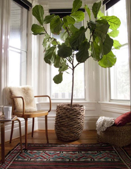 Image from  Gardenista.com