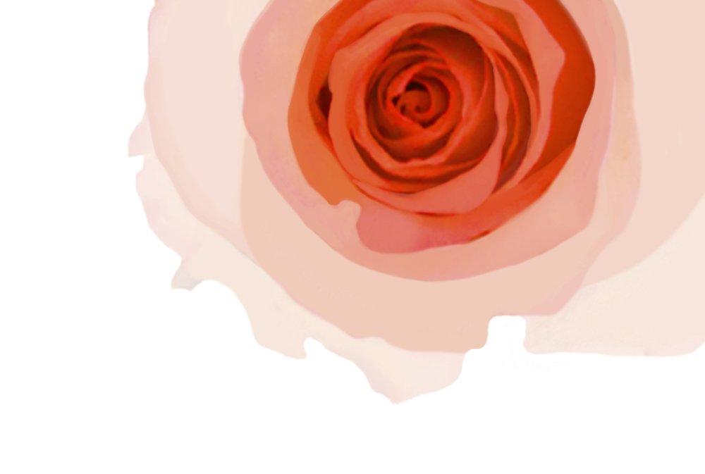 rose orange print.jpg