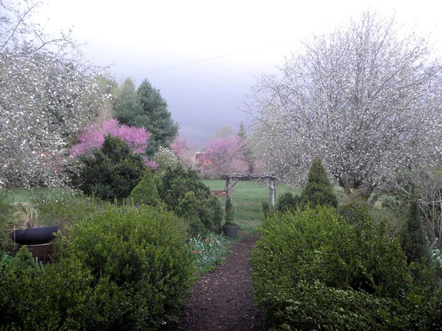 barnswallow_spring_garden.jpg