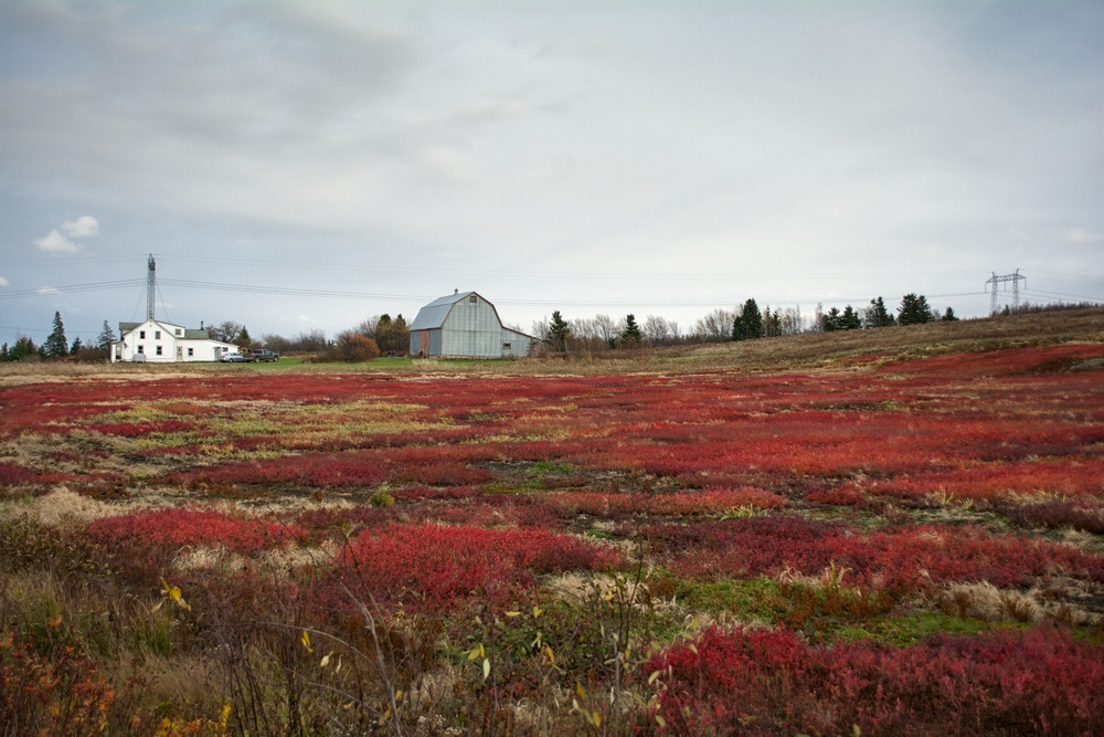 Blueberry Fields Redux 2.jpg
