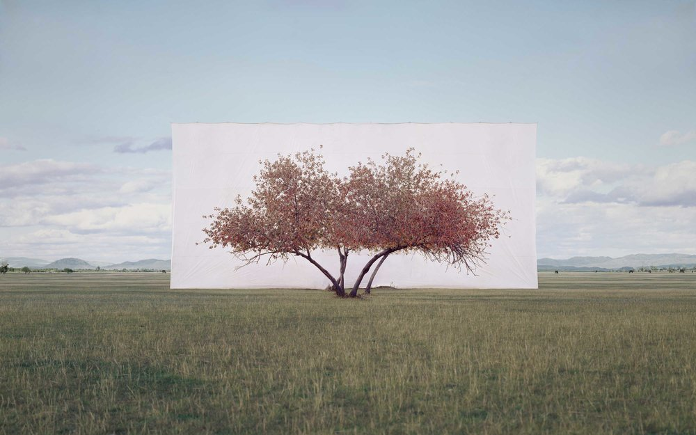 Myoung Ho Lee ,  Tree...#2 , 2012 © Myoung Ho Lee, Courtesy Yossi Milo Gallery, New York