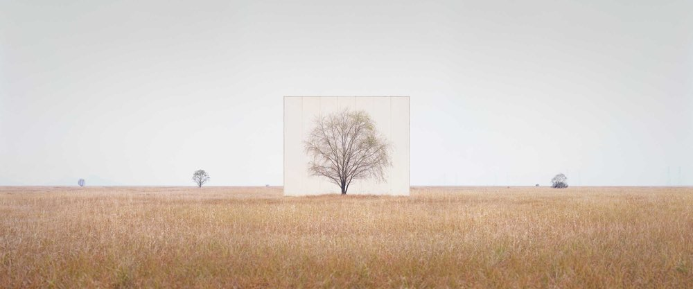 Myoung Ho Lee ,    Tree...#3 , 2012 © Myoung Ho Lee, Courtesy Yossi Milo Gallery, New York