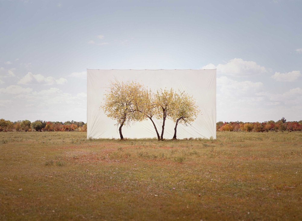 Myoung Ho Lee ,    Tree...#4 , 2013 © Myoung Ho Lee, Courtesy Yossi Milo Gallery, New York
