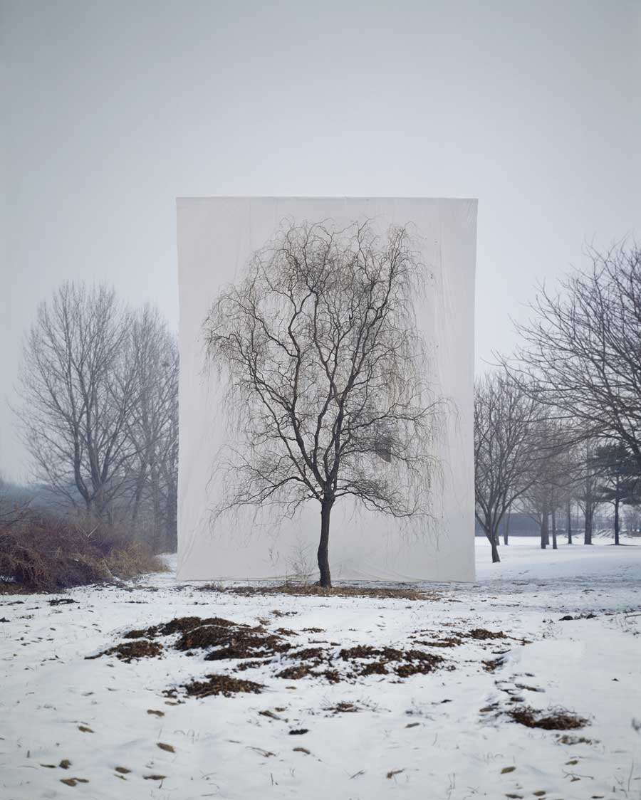 Myoung Ho Lee ,    Tree #3 , 2006 © Myoung Ho Lee, Courtesy Yossi Milo Gallery, New York
