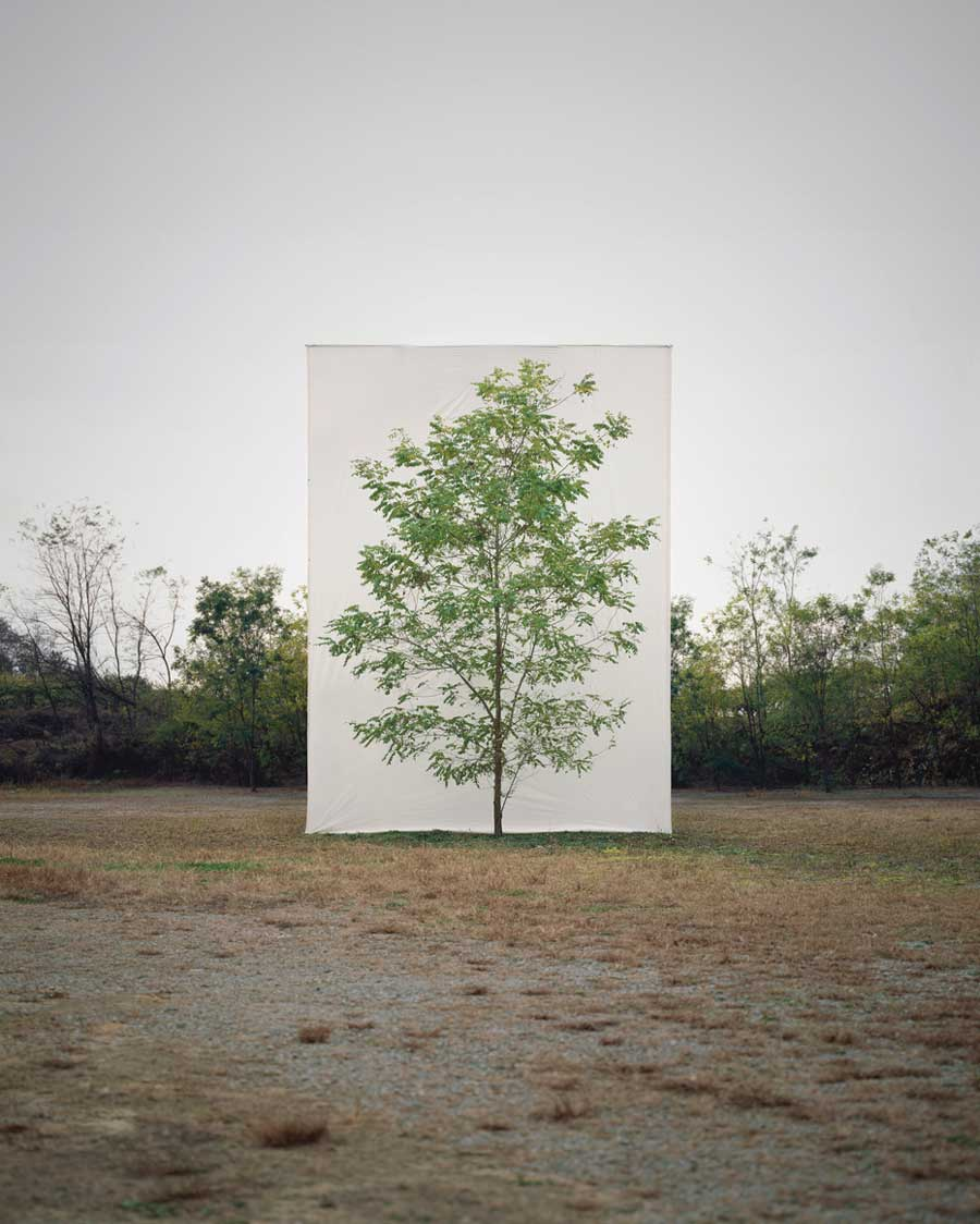 Myoung Ho Lee ,    Tree #9 , 2006 © Myoung Ho Lee, Courtesy Yossi Milo Gallery, New York