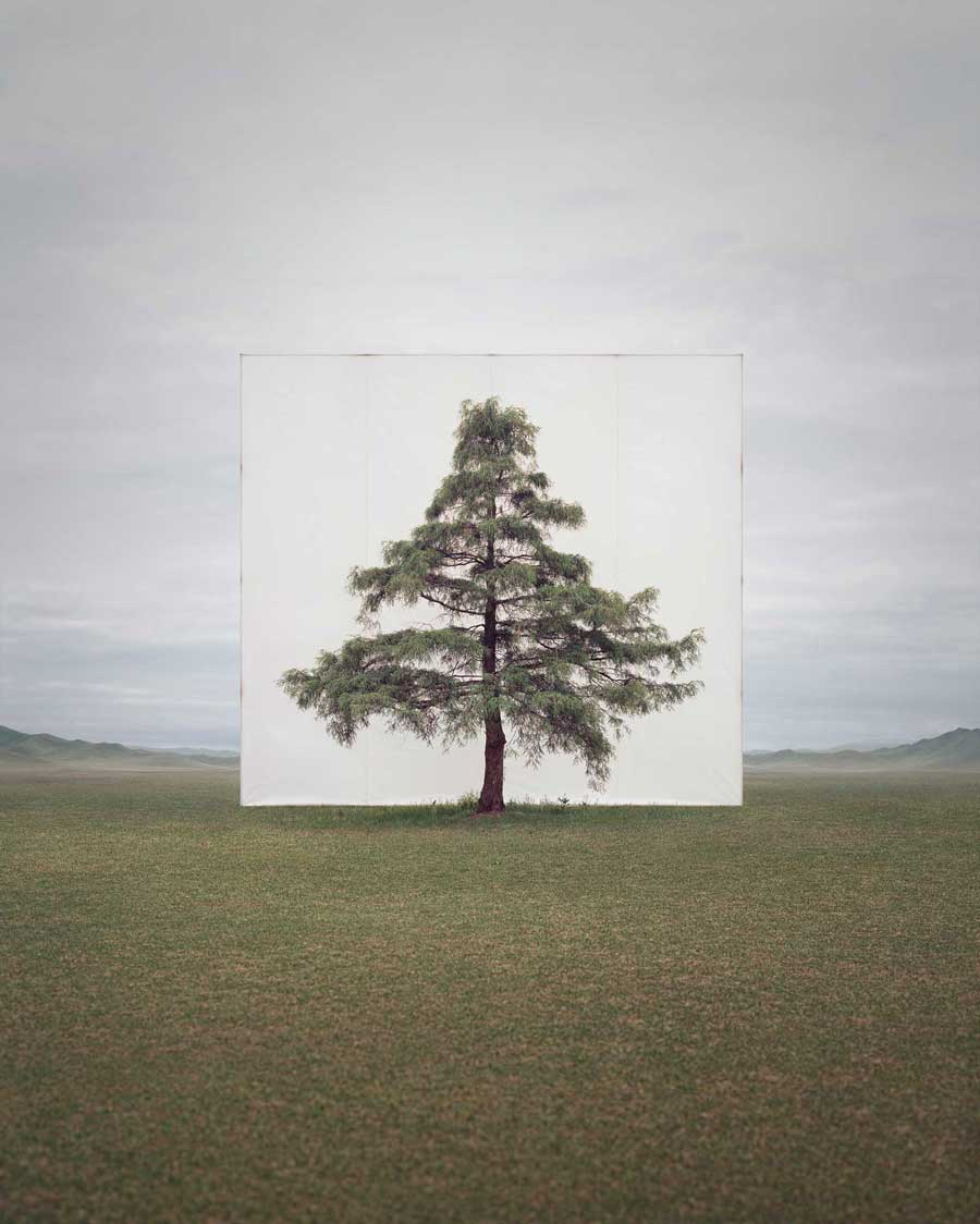 Myoung Ho Lee ,    Tree...#6 , 2013 © Myoung Ho Lee, Courtesy Yossi Milo Gallery, New York
