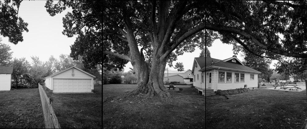 Black oak, Virginia, 2002