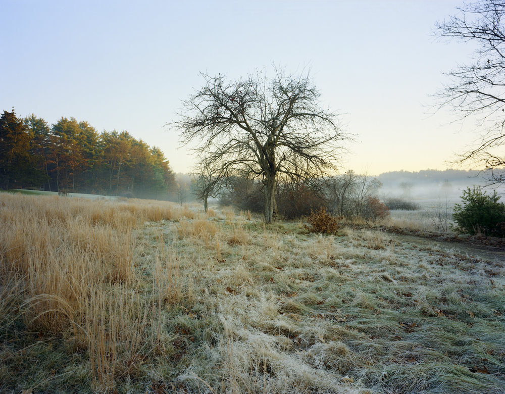 03-582 Meadow, frost, apple tree, full.jpg