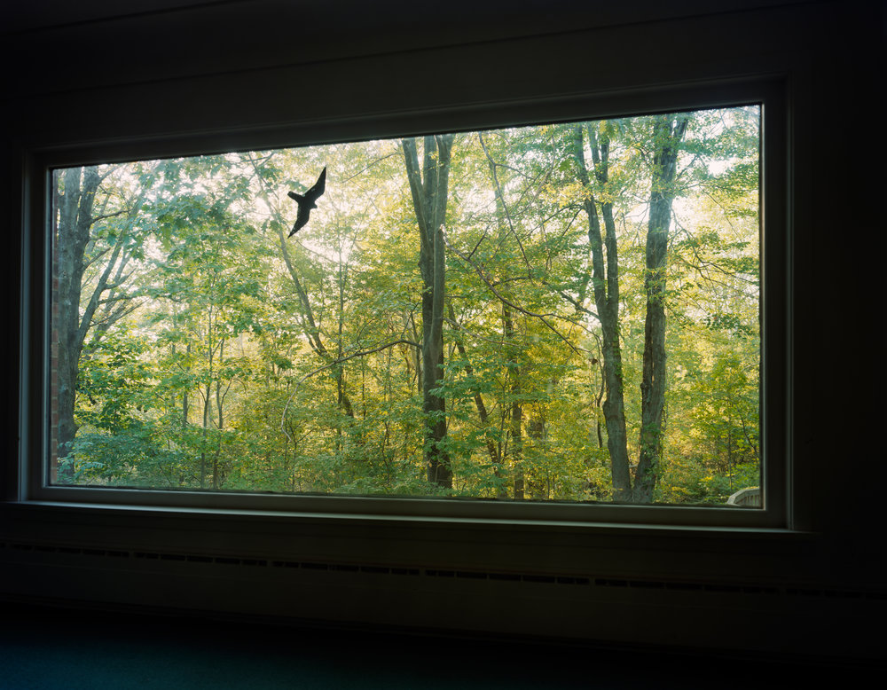 View from the living room of my childhood home, Novelty, 1992
