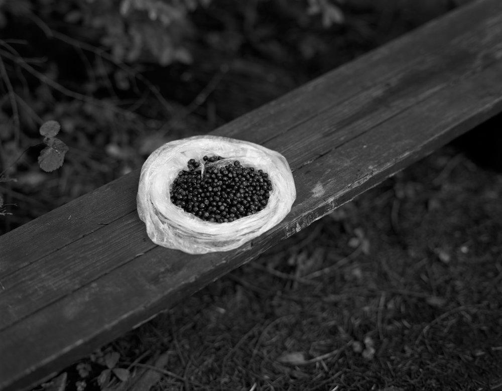 Huckleberries, 1997
