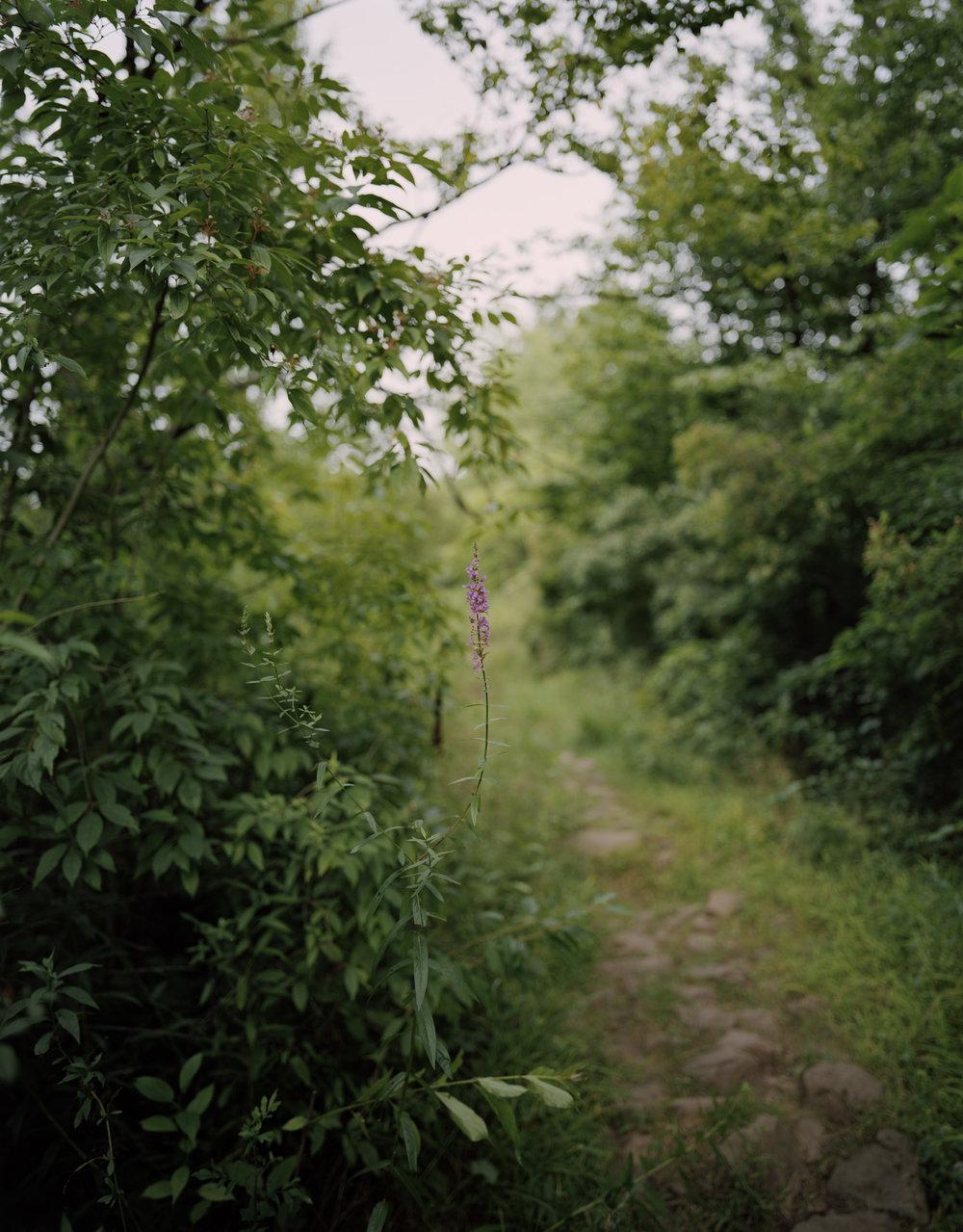 12-376 Flower along the trail_working spt50%.jpg