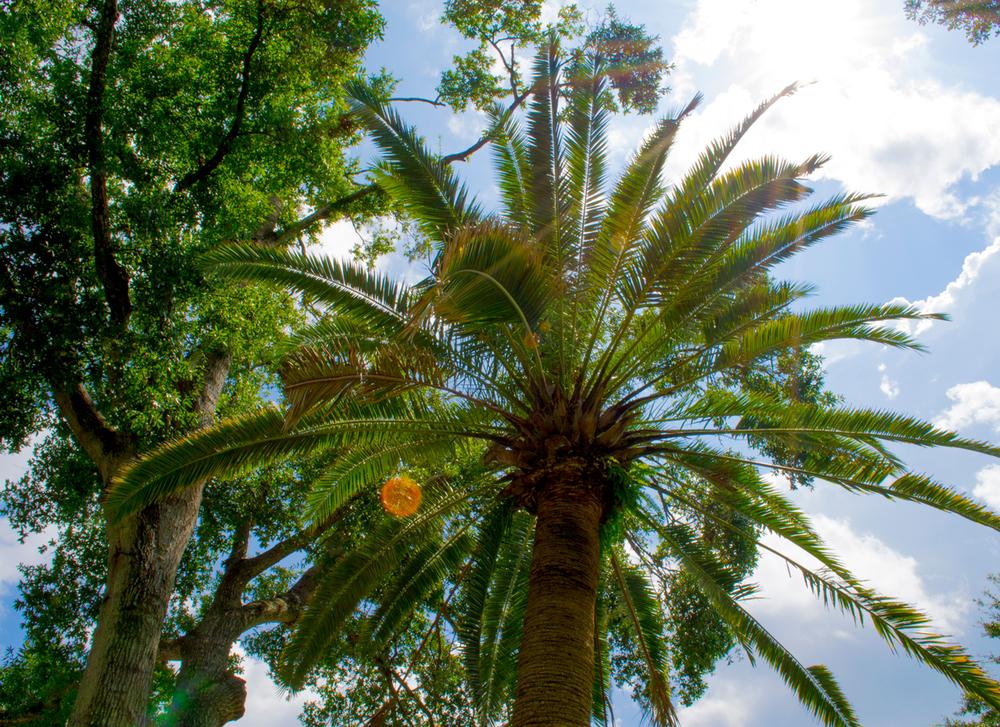 Le Palm Tree