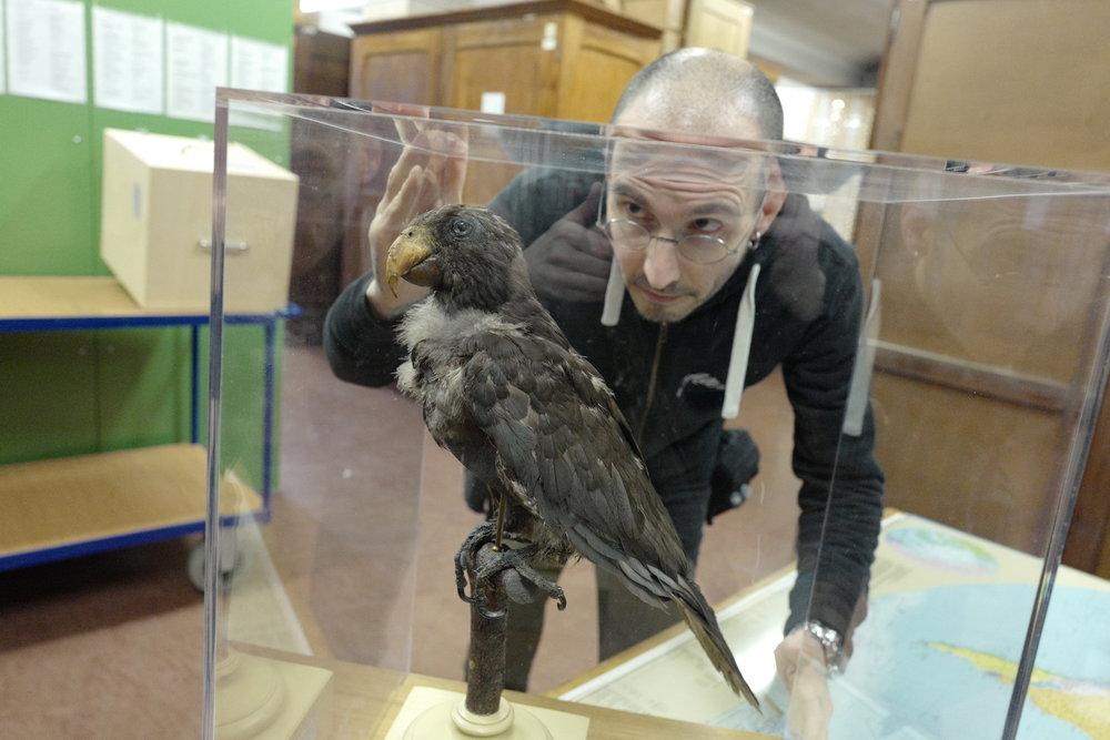 mark_benecke_mfn_museum_naturkunde_berlin_alexander_von_humboldt_papagei_L1010093.JPG