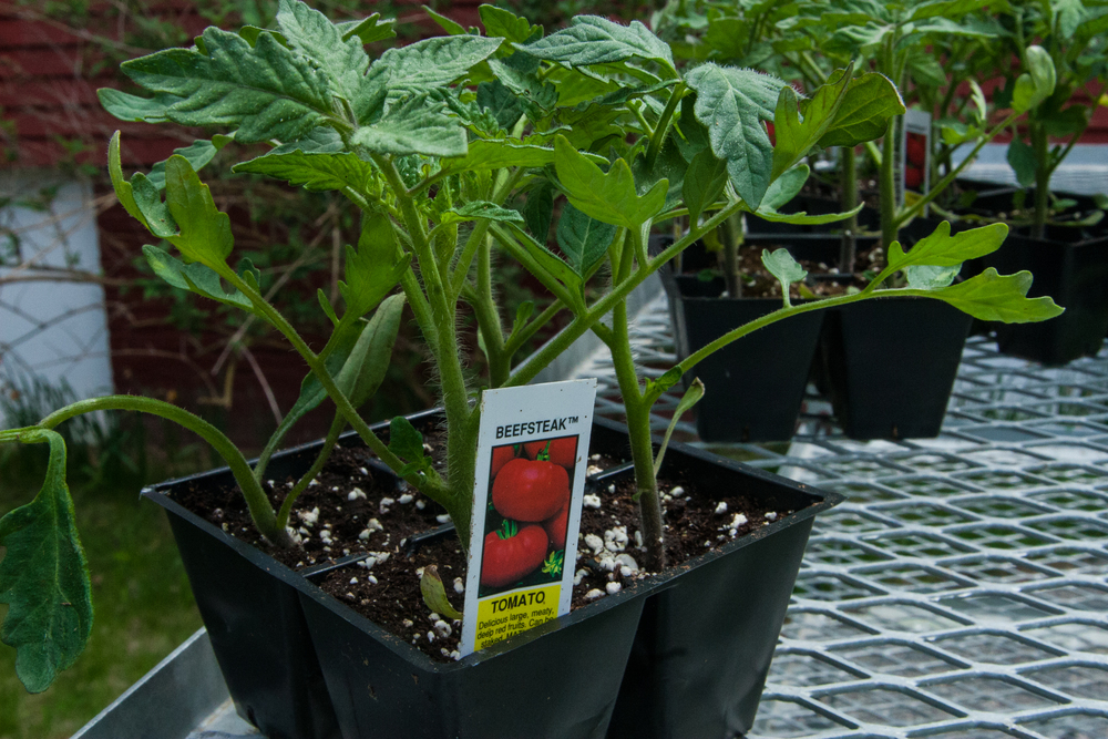 Plant Sale (7 of 8).jpg