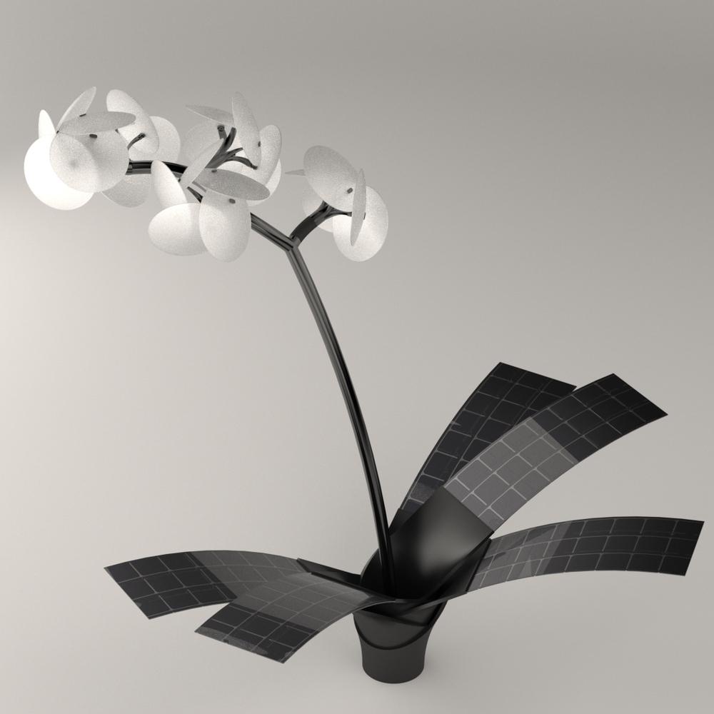 Orkys, l'orchidée solaire