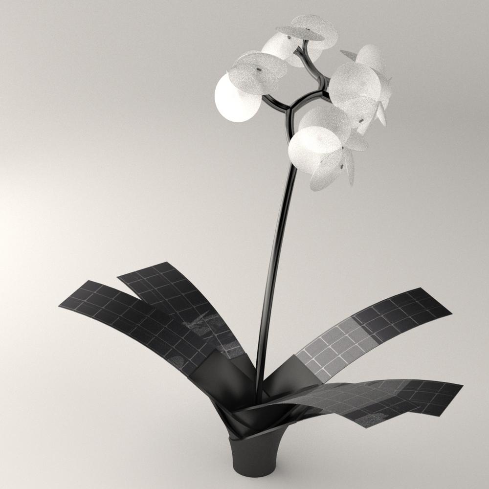 Orkys by Vivien Muller