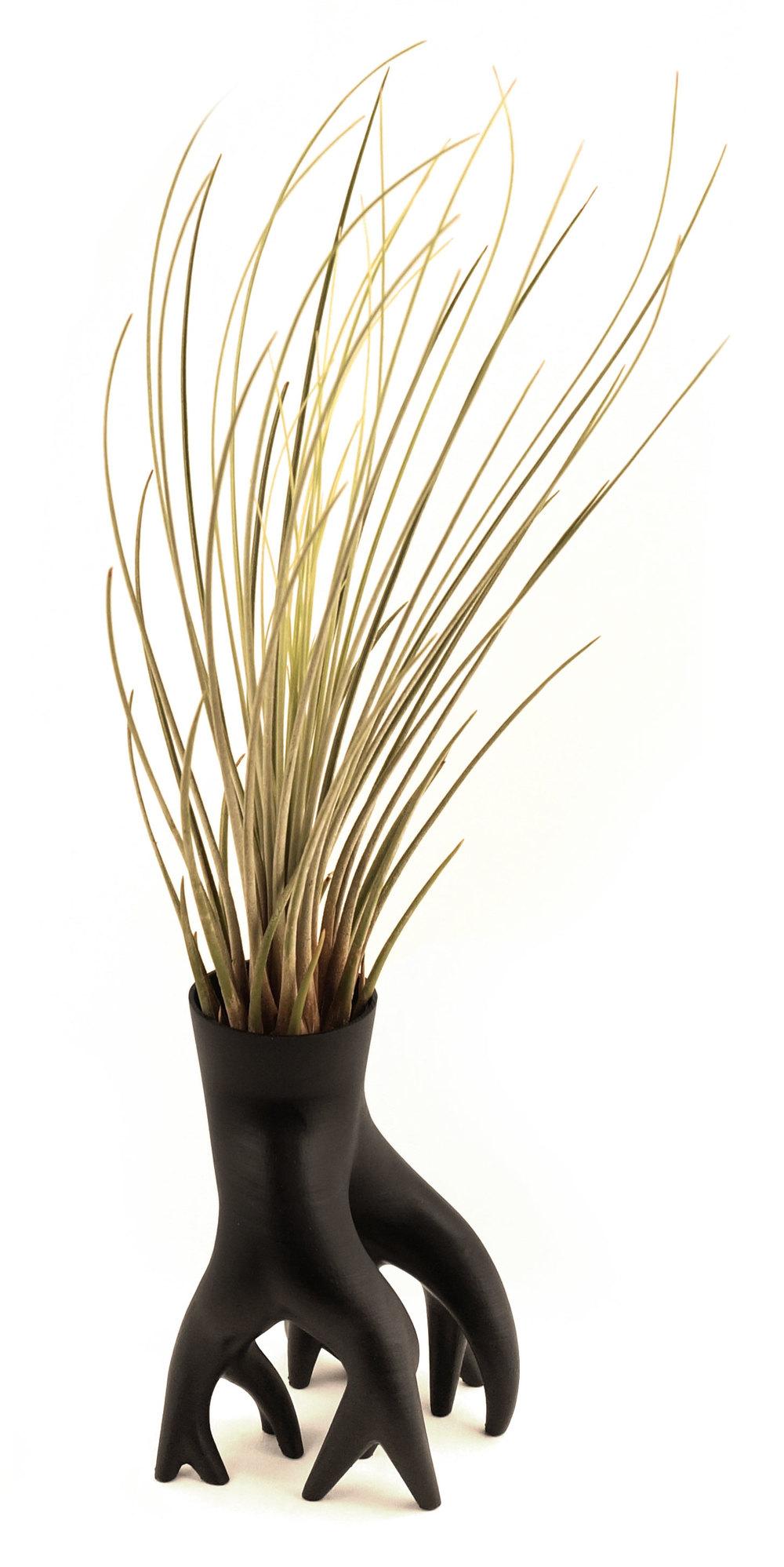 Mangrover, le pot idéal pour les tillandsias