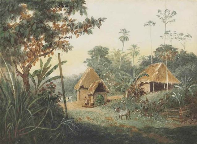 Thatched Huts on a Cocoa Estate