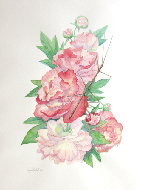 Peonies and Stick Insect