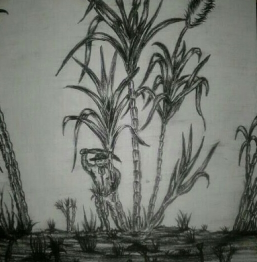 Plantation Days