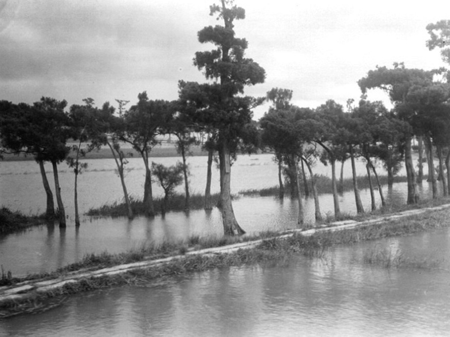 Trees and flooded fields- Republican period_905.jpg
