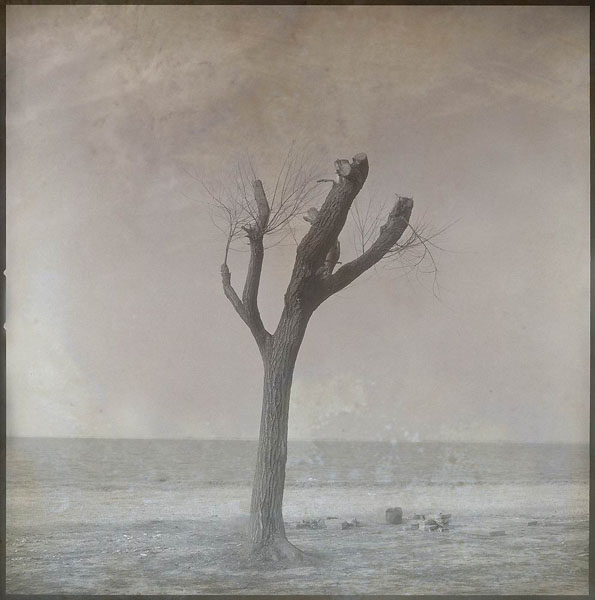 A Tree (2004/2006), variable sizes, archival pigment print on fine art paper