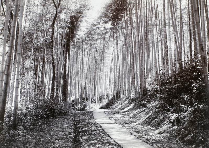 Path through bamboo groves, 1911