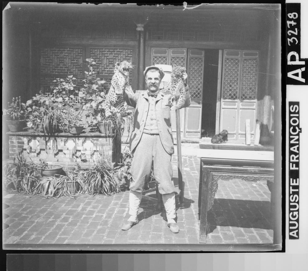 «Auguste François brandissant deux léopardeaux», circa 1900 – 1904, gelatin silver glass plate negative