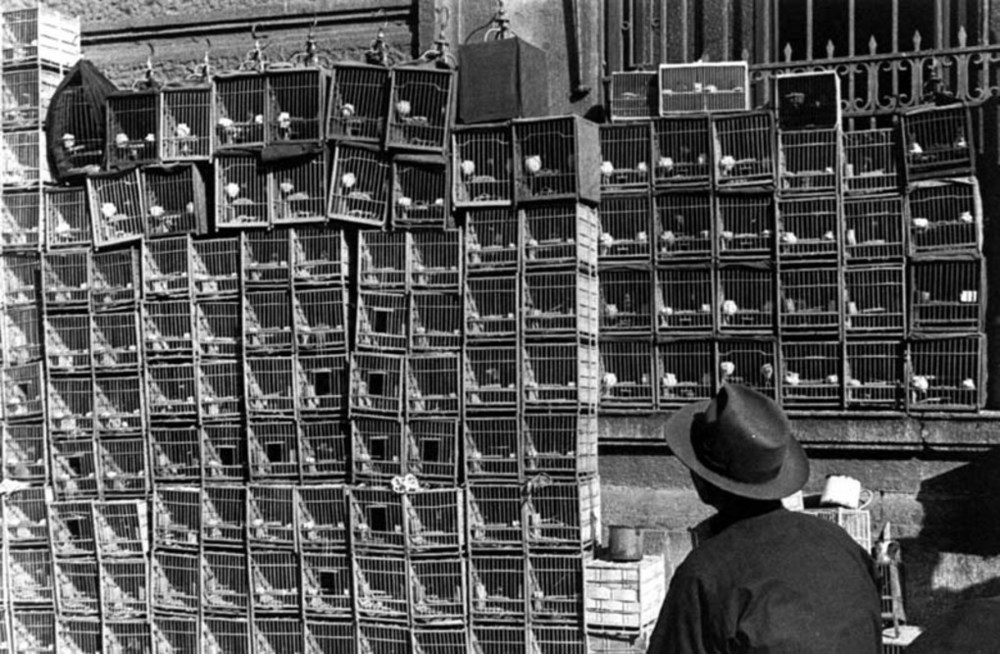 Cages with song birds, 1949. Image courtesy of the Institut d'Asie Orientale and Virtual Shanghai