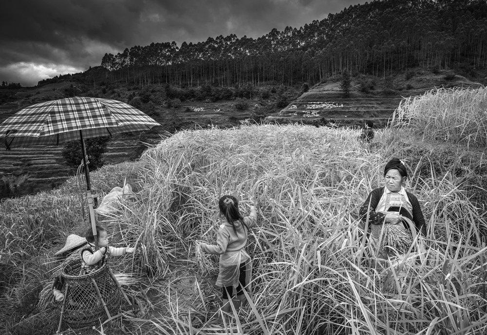 kuang-huimin-ancient-kam-rice-of-millennium-photography-of-china-(14).jpg
