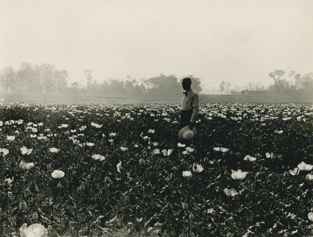 Opium meditations in a Szechuan poppy field. Prof. E.D. Burton, 1909-04, black and white photograph, 4.03 x 3.10. T.C. Chamberlin Collection