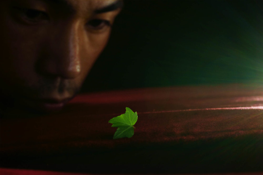 shen-wei-between-blossoms-photography-of-china-finding_a_leaf.jpg