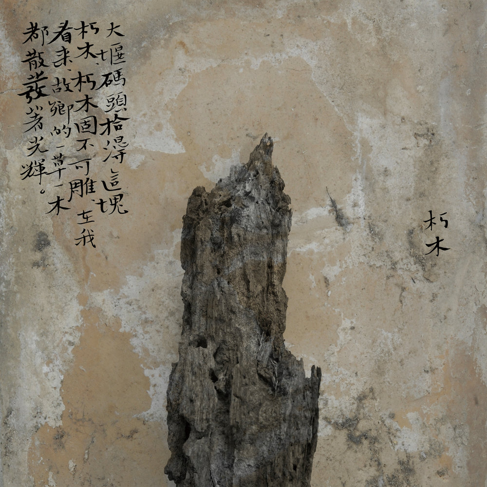 Wei Bi, Meng Xi II - Decomposing Wood, 2012 © Wei Bi / Artwork exhibited by SEE+