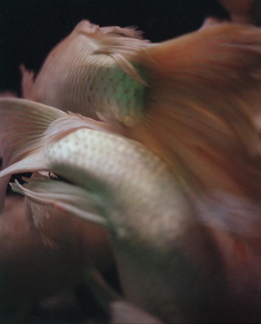 TeresaEng_ChinaDream_Wave (Fish)-photography-of-china.jpg