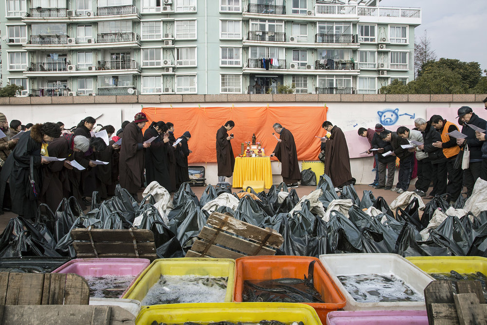 A fang sheng gathering at Shanghai ferry port, January 2015 © Liz Hingley. A number of Buddhist networks gather donations for the Buddhist practice of animal release and perform the traditional ritual on the various waterways that cross Shanghai.