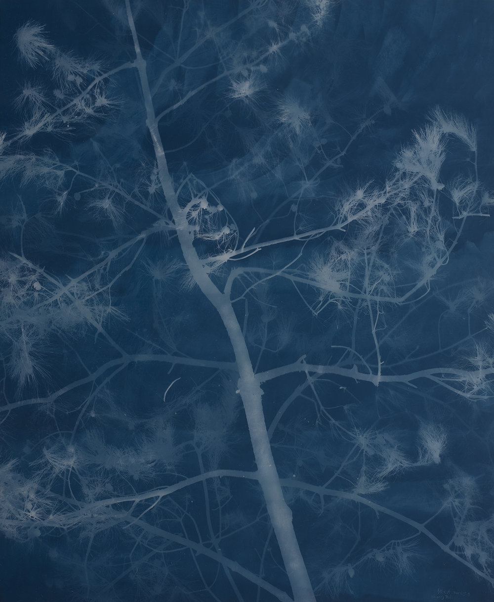 Pine (18), Cyanotype on Canvas, 279 X 230 cm, 2016 | Photo Copyright Artist Zhang Dali and Courtesy of Pékin Fine Arts