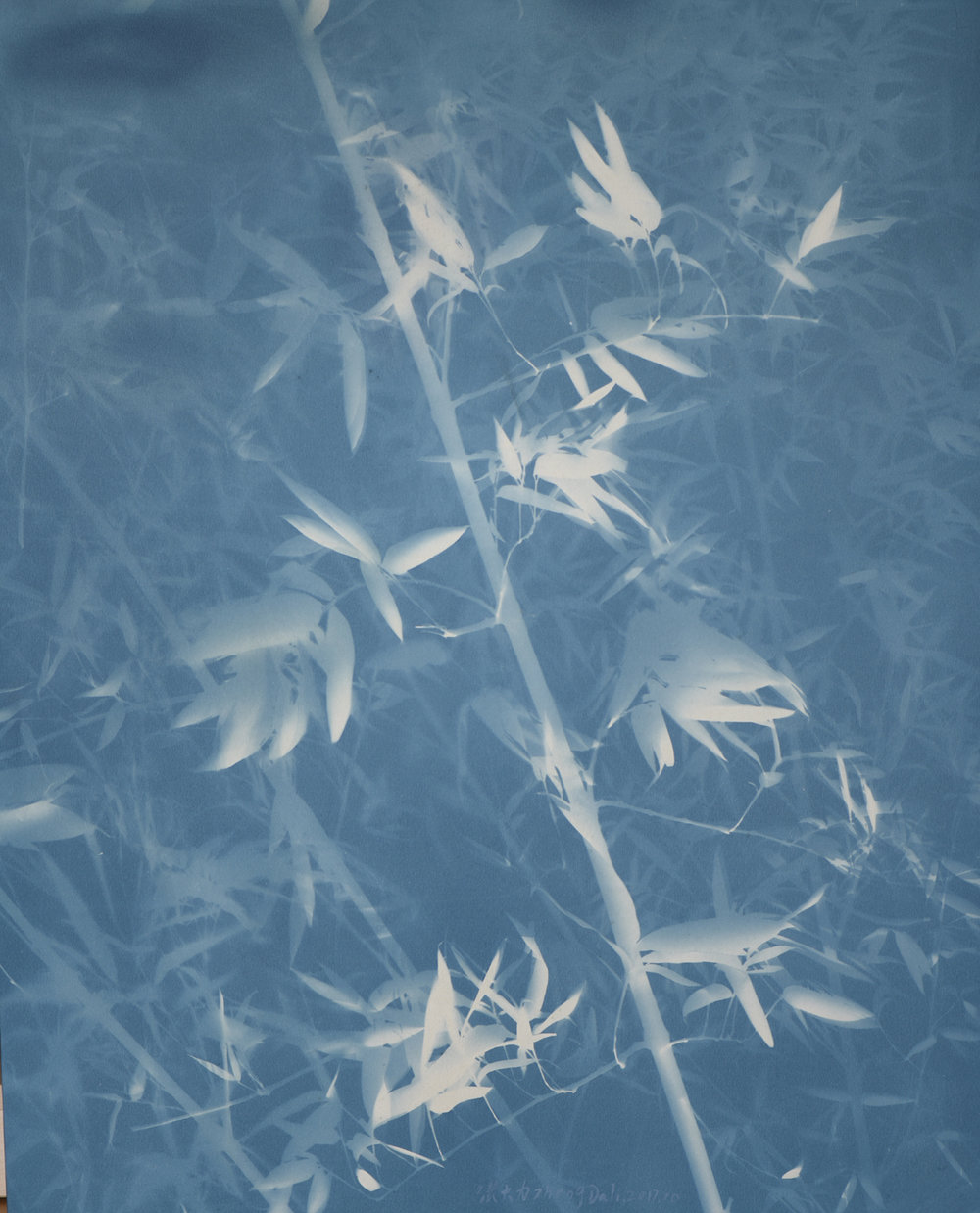 Bamboo No. 11, Cyanotype on canvas, 108 x 88 cm, 2017 | Photo Copyright Artist Zhang Dali and Courtesy of Pékin Fine Arts