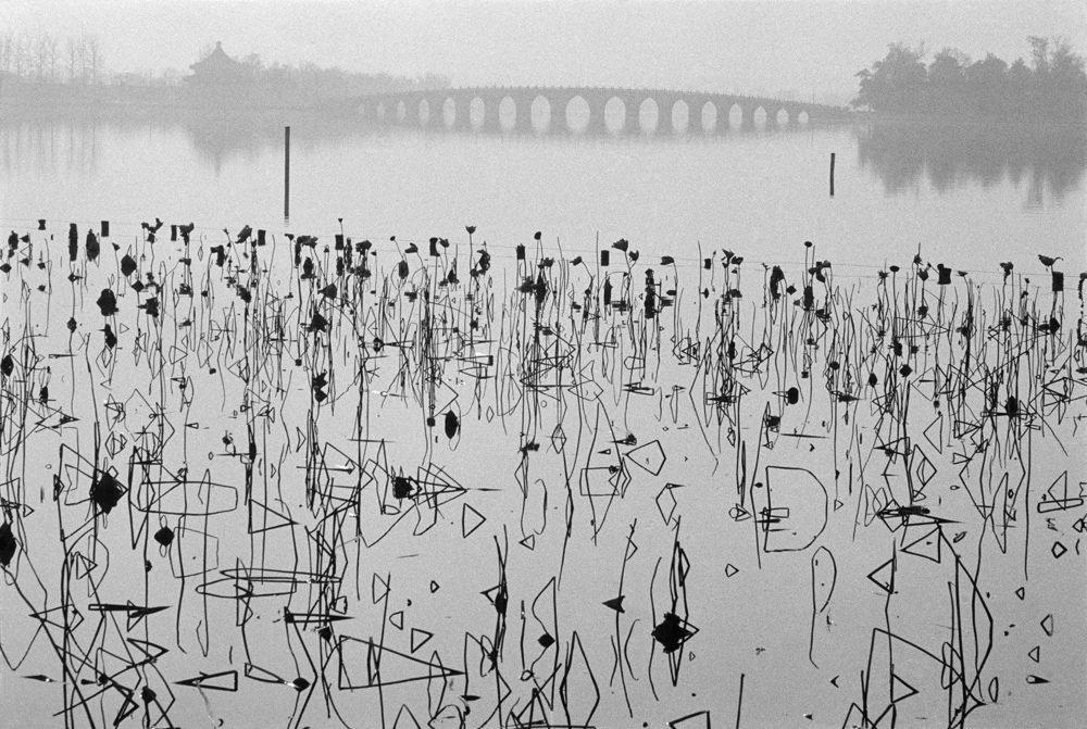 René Burri, 'Former Summer Palace. Dead lotus flowers on the Kunming Lake', Beijing, China, 1964. © Rene Burri/Magnum Photos