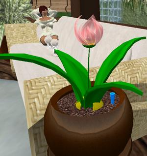 plantpets_012.jpg