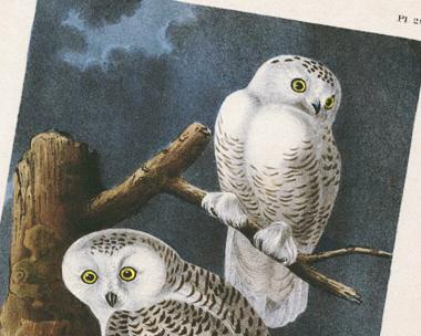 filter_owls.jpg