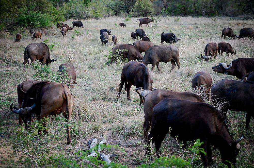 Africa (17 of 37).jpg