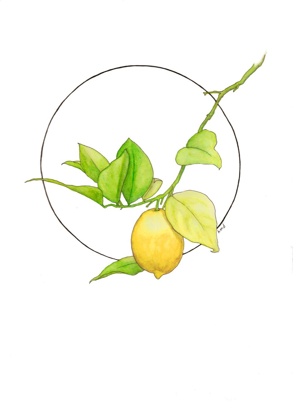 lemon circle wobg.jpg