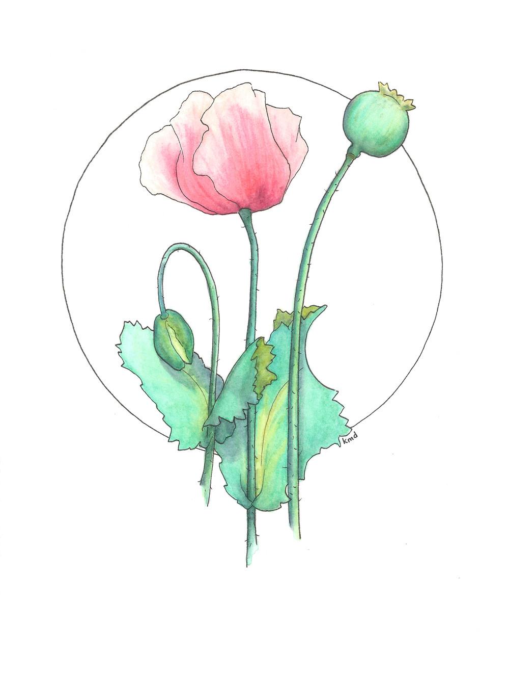 poppy 2 circle wobg.jpg