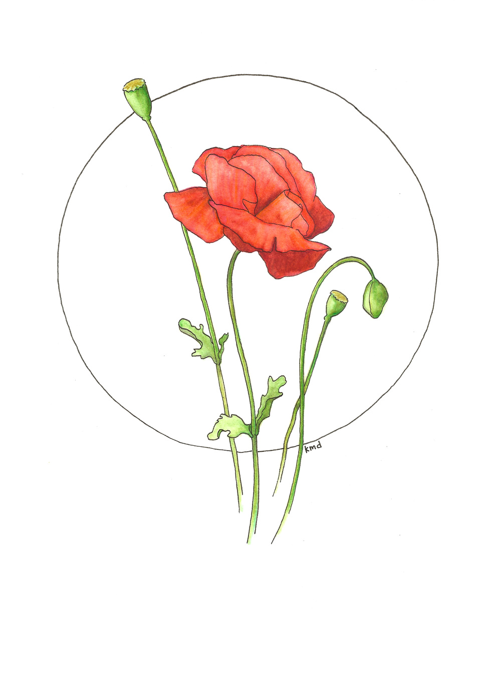 poppy circle wobg.jpg