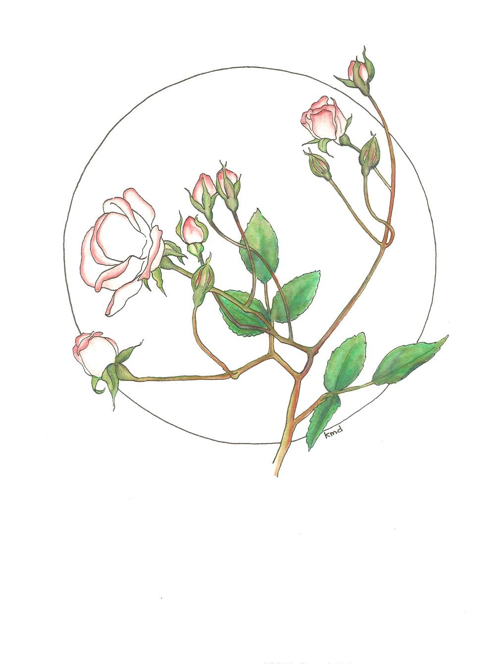 rose circle wobg.jpg