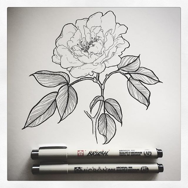 First ink drawing in...holy shit, over a year. Anyone else find it difficult to want to draw while depressed? I'm hoping this is the beginning of a better mental health year than the last... . #drawing #ink #blackandwhite #micronpen #micron005 #pigmabrushpen #wildrose #rose #inkdrawing #oslomarka #flowerdrawing #floral #botanicalillustration