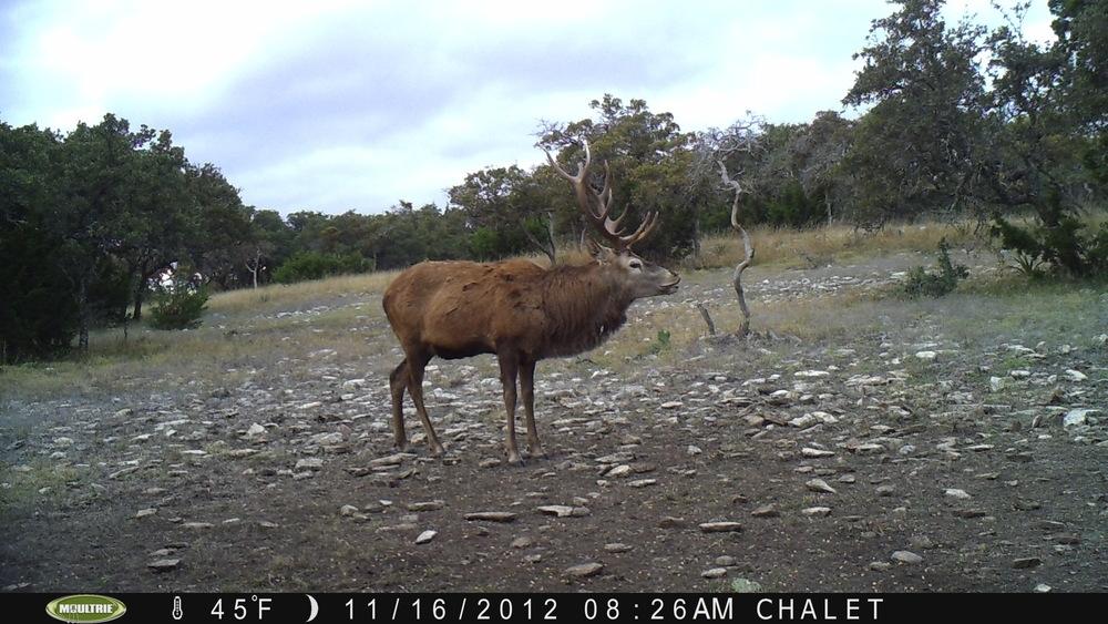 Red Deer 1.JPG