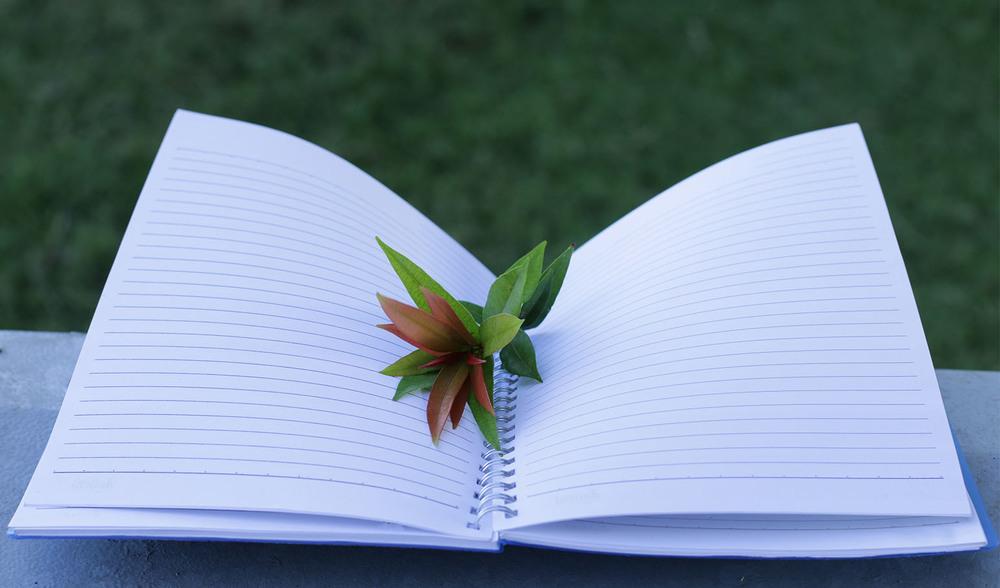Karangan Narasi Dan Cara Menyusunnya Universitas Ciputra